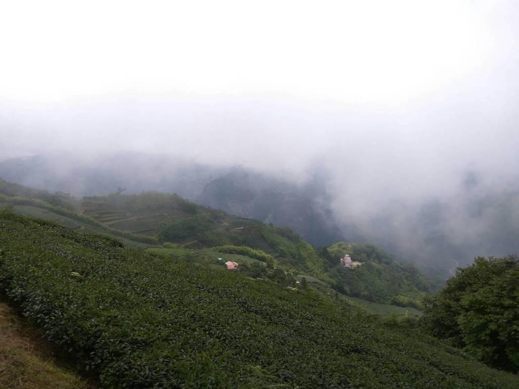 夏季熱浪來襲,全台灣熱島效應,雲林避暑秘境二尖山山頂涼亭吸引民眾上山乘涼,一旁的...