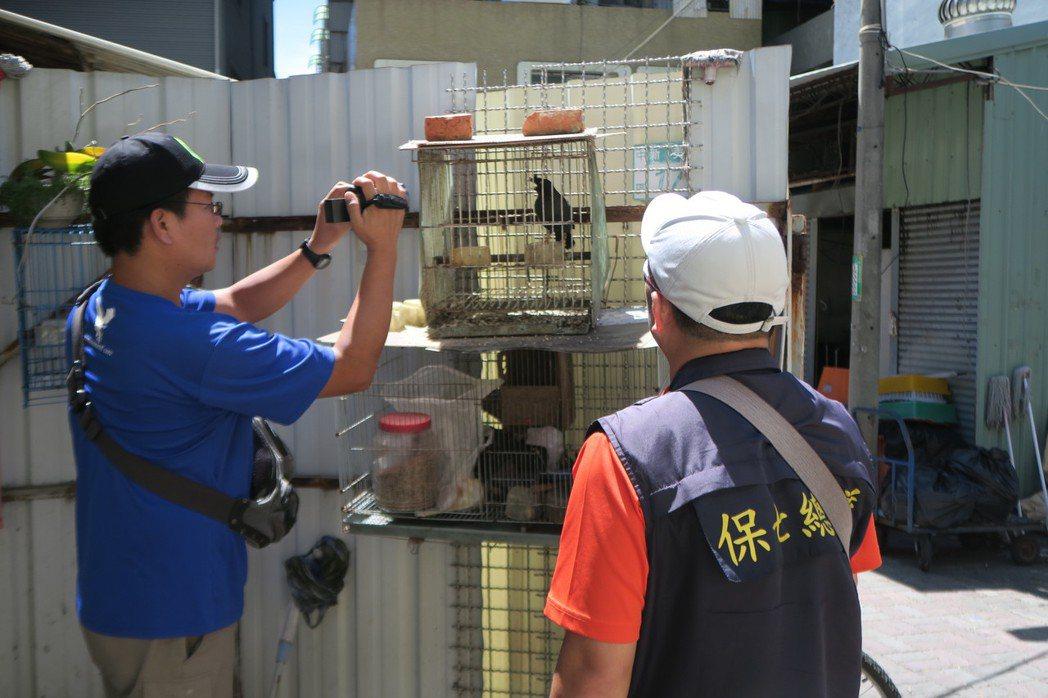 警方查獲麵攤老闆違法飼養保育類的台灣八哥。記者謝恩得/翻攝