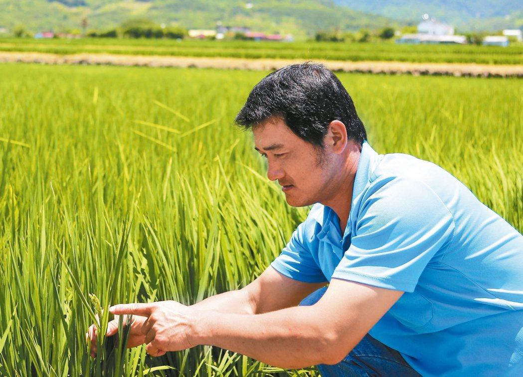 種植有機米的農青湯日增,每天使用「神農一指收」App記錄稻米的生長與無毒農法。 ...