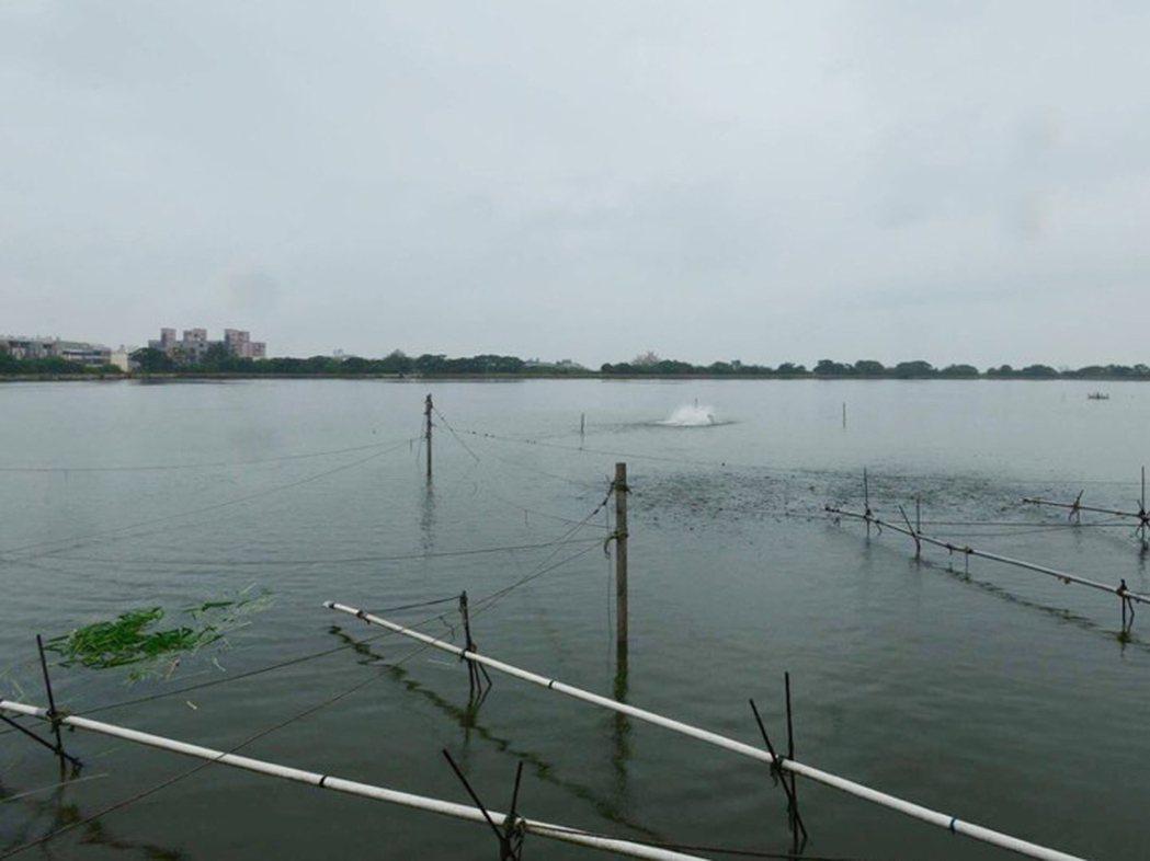 湖泊病毒的傳染很迅速,可能讓魚場接連感染。 中央社