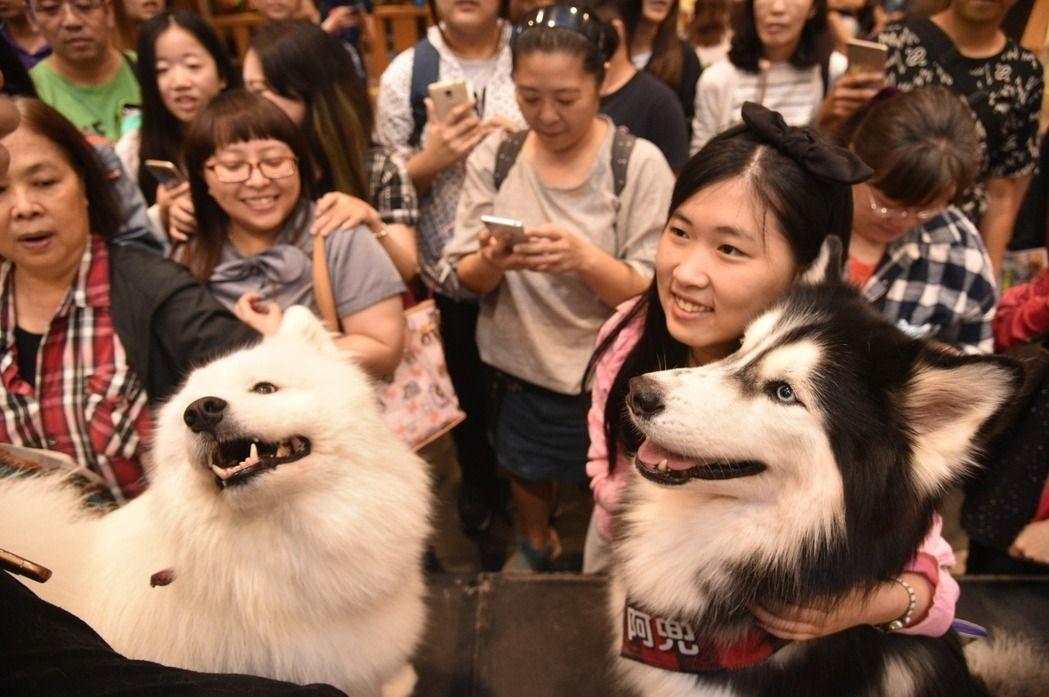 養毛小孩正夯!勞動部今年開辦「寵物美容丙級」檢定。報系資料照