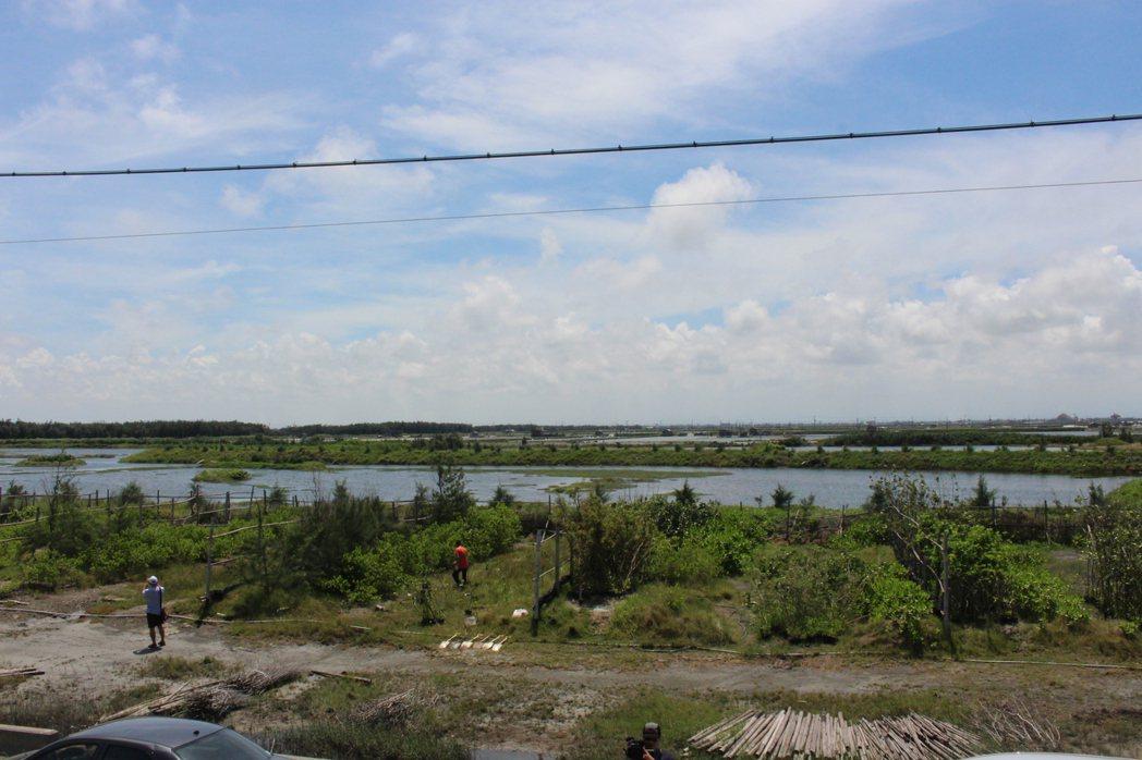 慈心基金會在雲林縣台西海園種植樹木有成,幫助蘊涵淡水資源,成為地層下陷區,減緩海...