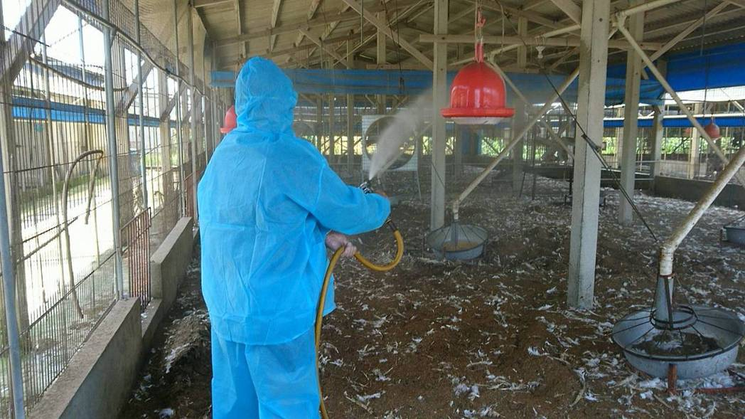 下營一火雞場H5N2亞型高病原性禽流感,今撲殺1787隻火雞。記者謝進盛/翻攝