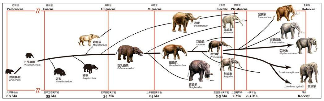 大象演化的歷史。 圖/國立自然科學博物館提供