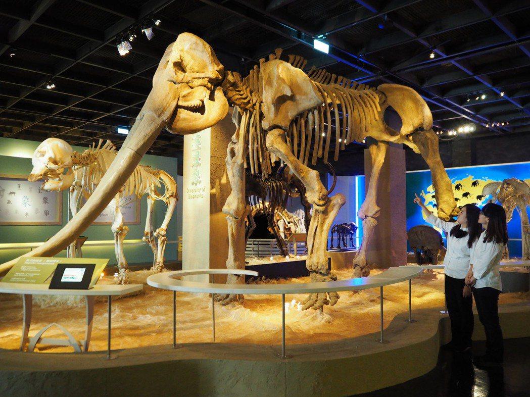 大象是當今世界上體型最大的陸生哺乳動物,這是距今200萬年前的黃河劍齒象複製標本...