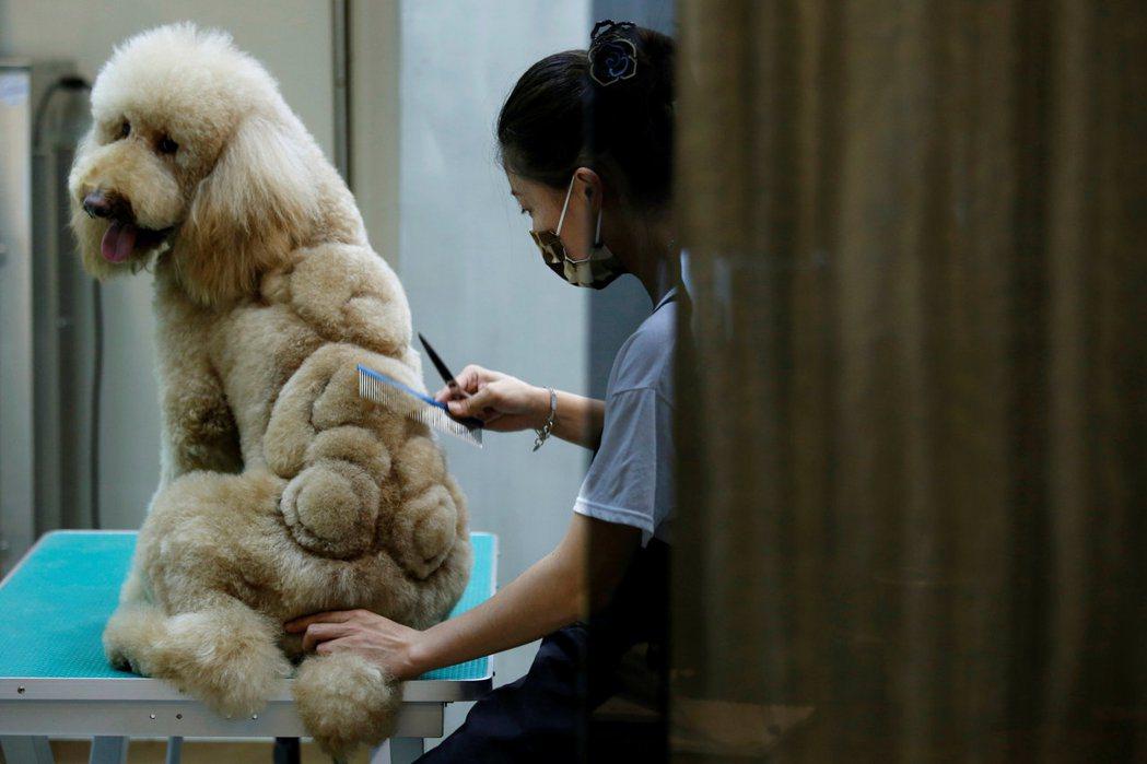 許多飼主只是想將狗打扮成他們喜愛的造型,表面上的受寵反而是動物更加被物化的象徵。...