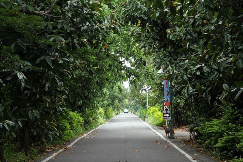 輕騎行活動途中會經過林蔭蓊鬱的綠色隧道,穿梭涼爽樹林中,令人心曠神怡。(攝影/盧...