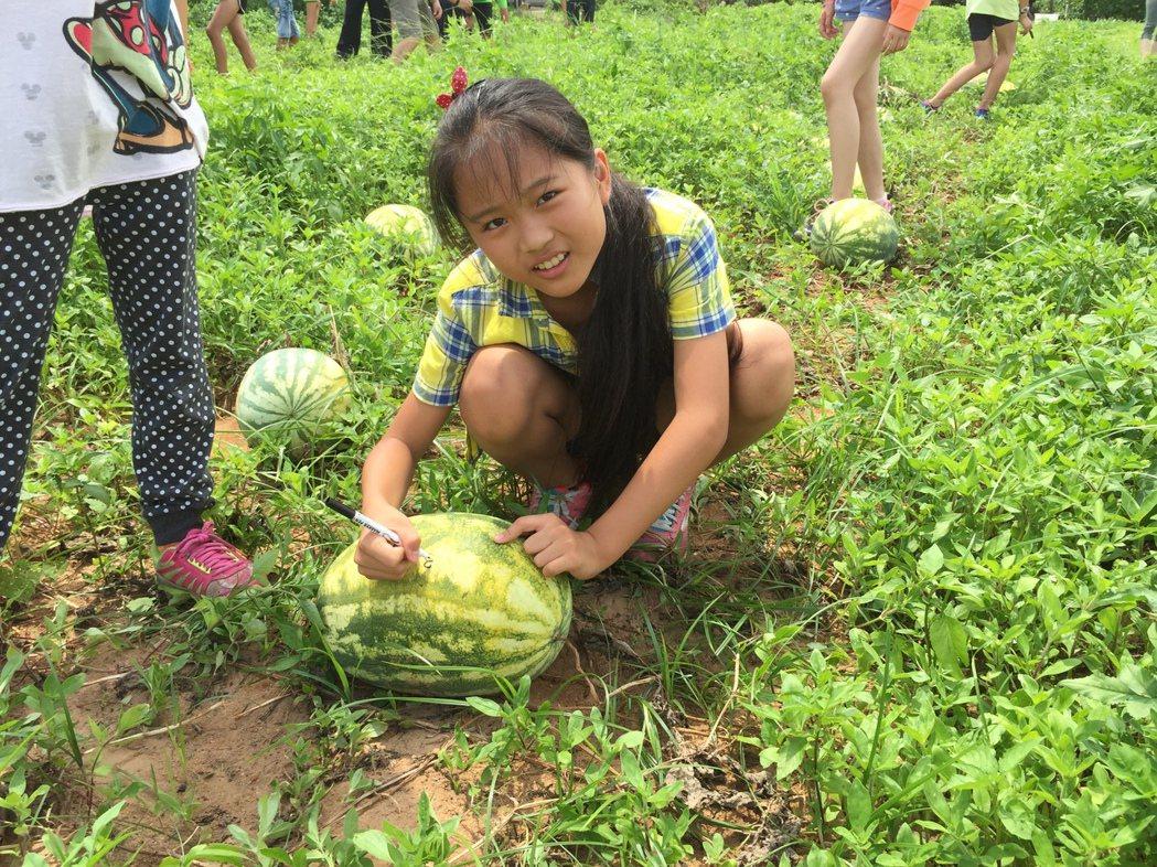金門多年國小的小朋友,昨天採收自己種植的西瓜,小朋友開心的在西瓜上面簽名。記者蔡...