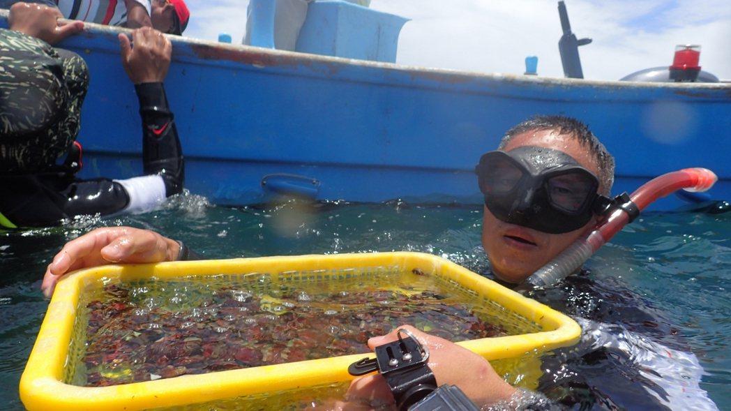 潛水人員協助將九孔苗放流貢寮卯澳灣。圖/新北市農業局提供