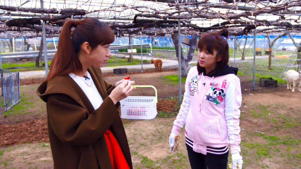 方志友(左)獨享鮮甜草莓,六月只能乾瞪眼。圖/TVBS提供