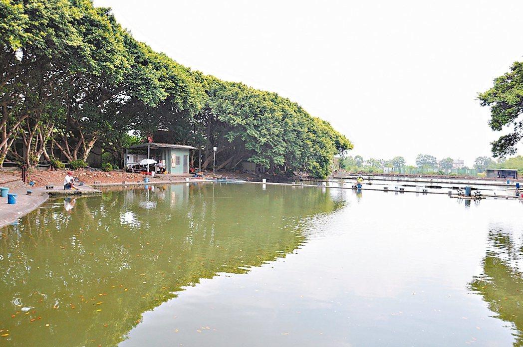 桃園市政府進行埔心溪流域治理工程,將價購魚管處魚池作為滯洪池。 記者張裕珍/攝影