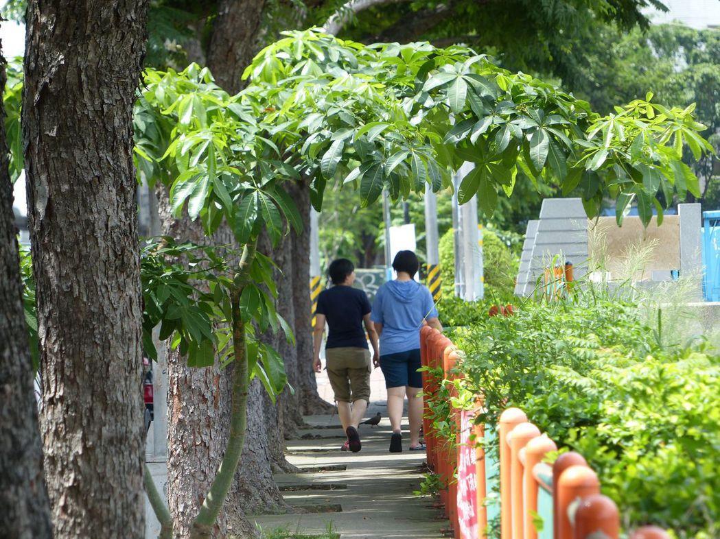 台中市麻園頭溪旁的步道,扣掉樹穴空間,僅容單人通行,兩人並肩而走就顯得擁擠,輪椅...