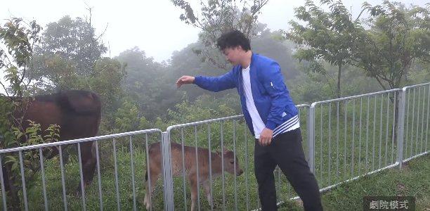 陳奕迅拍攝新歌「放」MV,和牛玩得很開心。圖/環球唱片提供