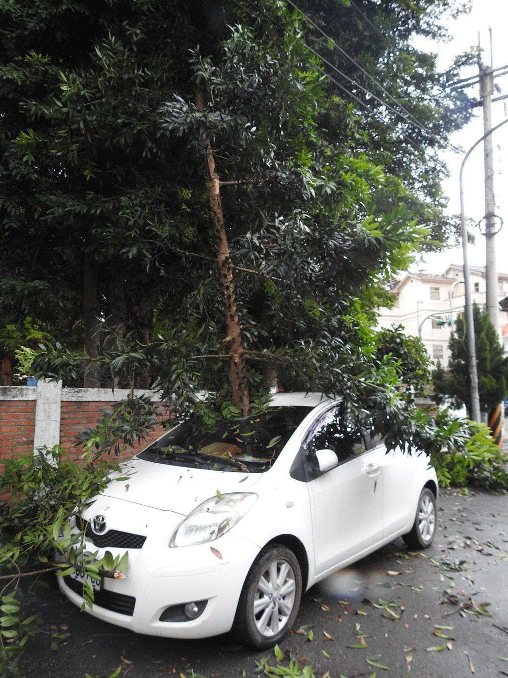 育英國小校樹今被風吹斷後插破校牆旁車輛,嚇傻要移車的車主,險上演「絕命終結站」。...