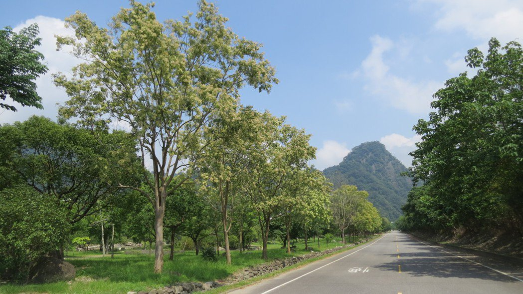 雪霸國家公園管理處園區光蠟樹有優勢,處處可見身影。記者范榮達/攝影