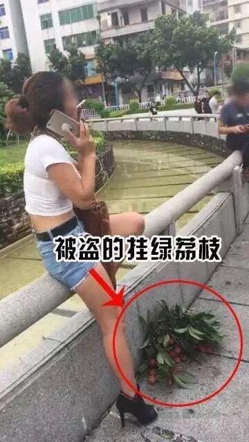 偷摘天價掛綠荔枝淡定吃的女子。(取自新快報)