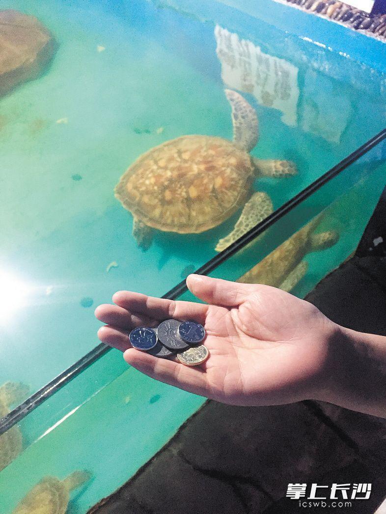 長沙一海洋世界大海龜誤食遊客亂扔硬幣,被活活噎死。(取自長沙晚報)