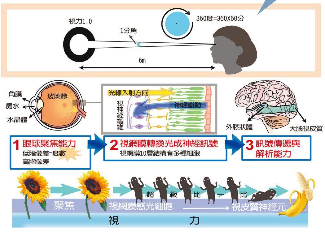視力的成像過程與說明。 圖╱嘎哩喇賽-Pink