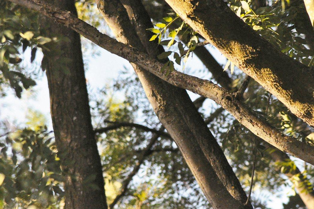 走在樹林裡,聽見天空中有飛機掠過,抬頭細看發現是一台軍用飛機,因為離地面不遠看得...