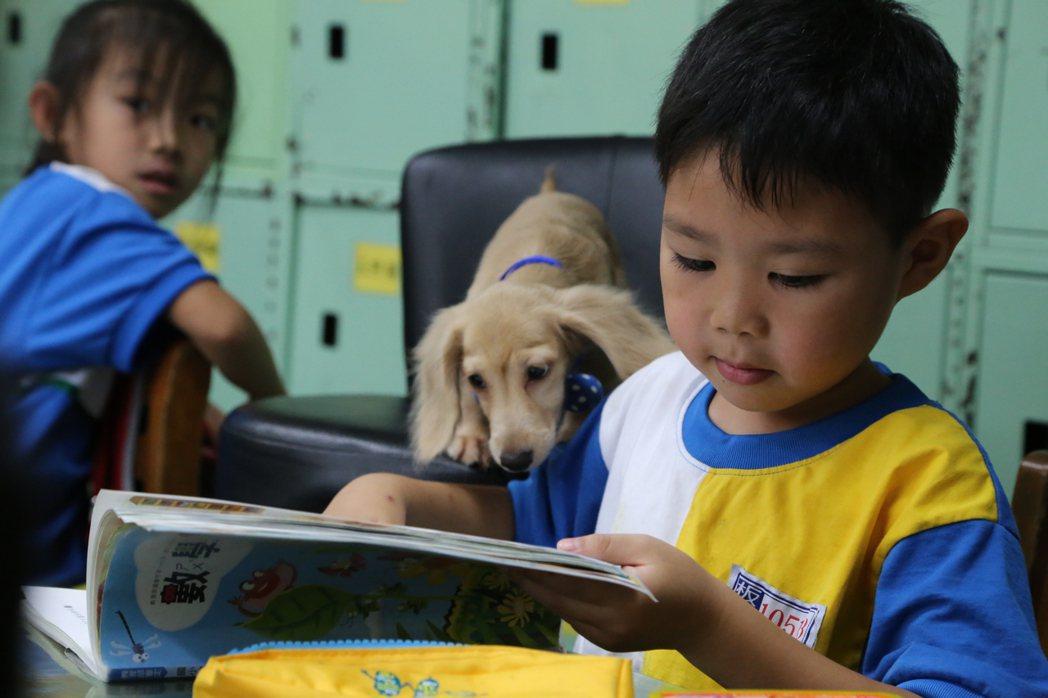 從非法繁殖場救出的「小安」,會和小朋友一起認真讀書,是隻稱職的伴讀犬。圖/新北市...