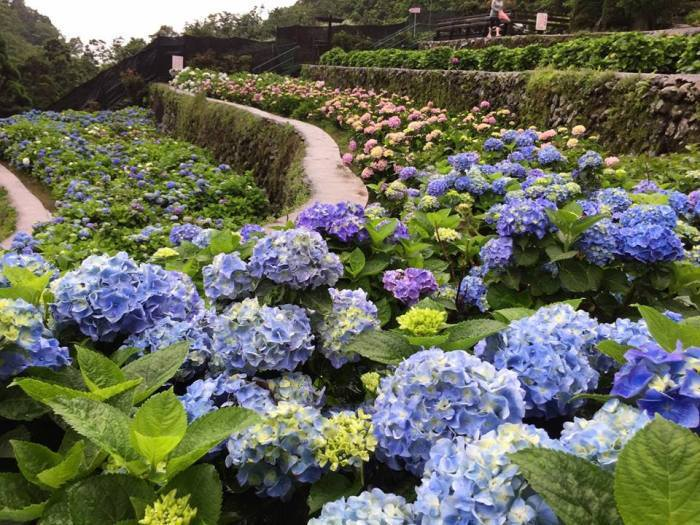 大梯田花卉生態農園FB