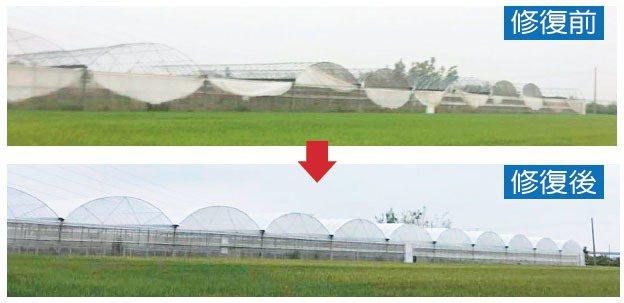 高雄某農業栽培設施去年颱風連續毀損兩次,由於缺工缺料,直到今年5月中,設施才修復...