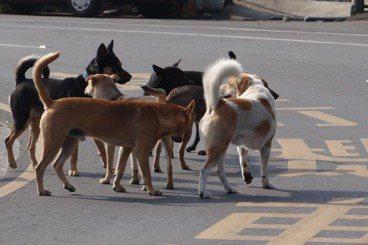 黃宗潔/從寵物到流浪動物:在城市的暗處