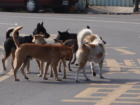 從寵物到流浪動物:在城市的暗處