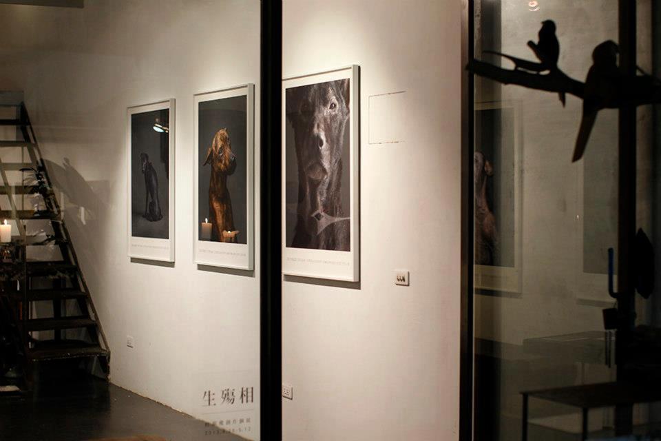 攝影師杜韻飛以台灣各公立收容所「安樂死」前的狗兒為素材的作品《生殤相》,對於台灣...