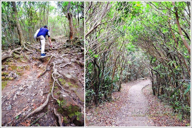 ↑除了陡階,也有土石陡坡,但沿途的灌木林相很優美。
