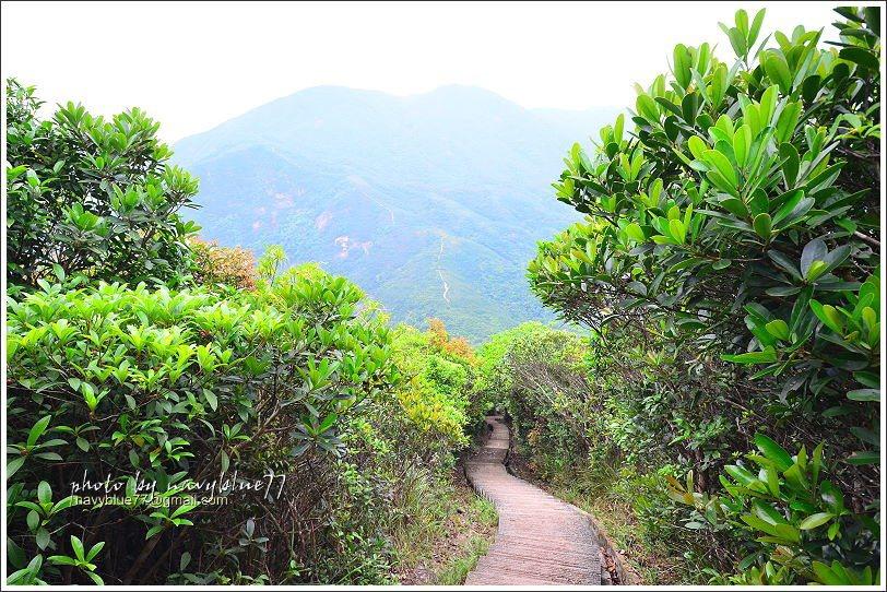 ↑越過孖崗山北峰又是陡下階梯,一路陡下到海拔150M的紫崗橋。