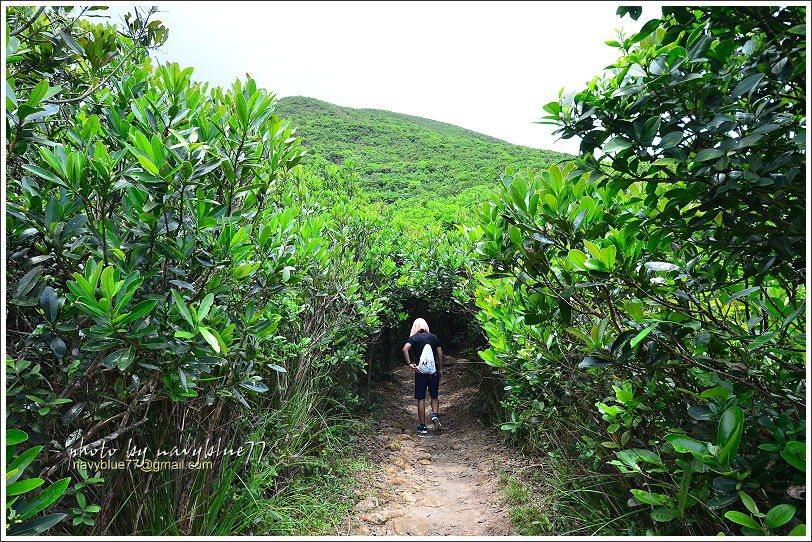 ↑香港的氣溫經常偏高,還好有時有灌木綠隧可以遮陽。
