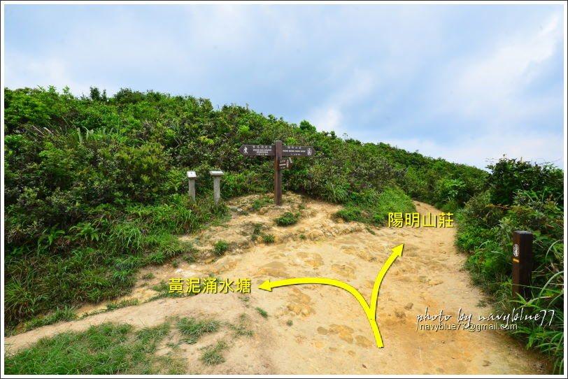 ↑此叉路左行直接到黃泥涌水塘,我們取右先往陽明山莊。