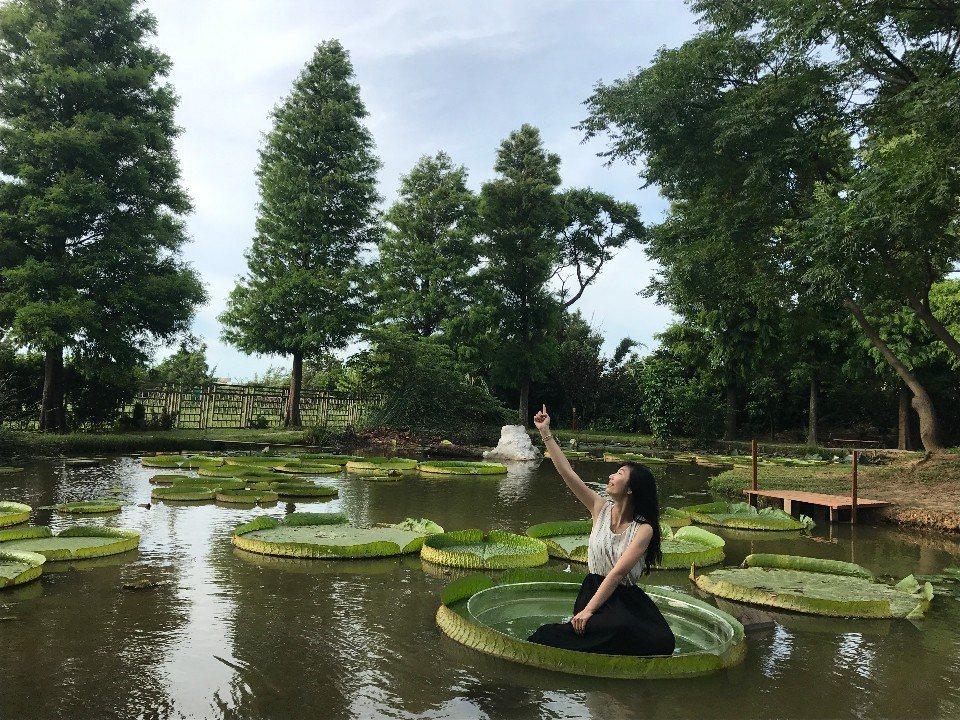 坐上大王蓮花的蓮葉,享受輕功水上飄的樂趣!(圖片提供/桃園市政府觀光局)