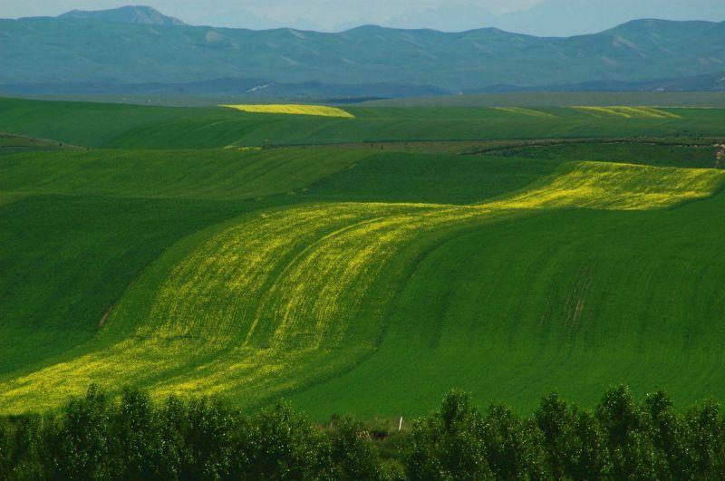 昭蘇大草原迷人的綠。(Photo|123RF)