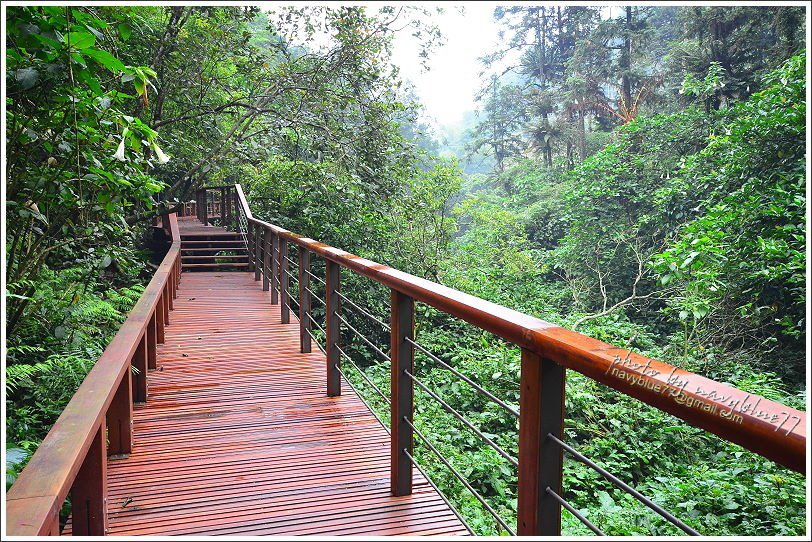 ↑五月是曼陀羅花的季節,步道附近可見曼陀羅花的蹤影。