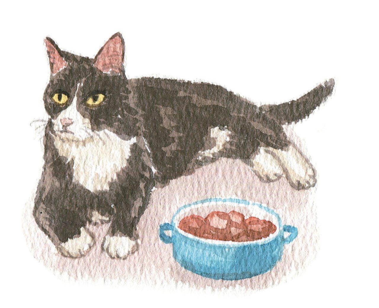 我的一位貓病患,有陣子出現劇烈嘔吐的問題。他是一隻有些生活小潔癖的金吉拉,名...