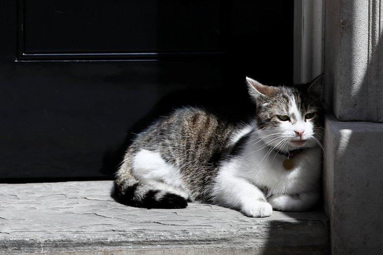 一隻看來很安靜的貓咪靜佇在街角,總被認為是一種美麗的意象,但是這樣的意象是怎麼出...