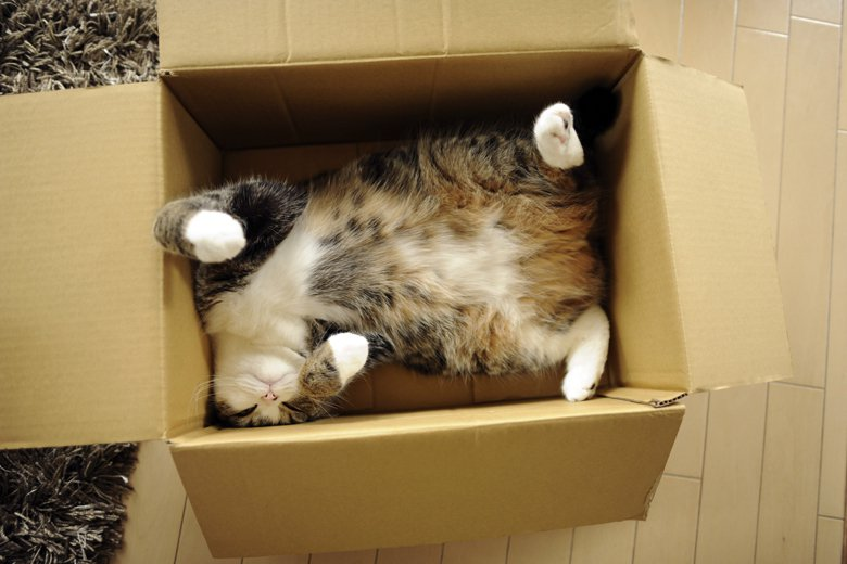 我們為何成為貓奴:我們愛的是貓,還是那個愛上貓的自己?