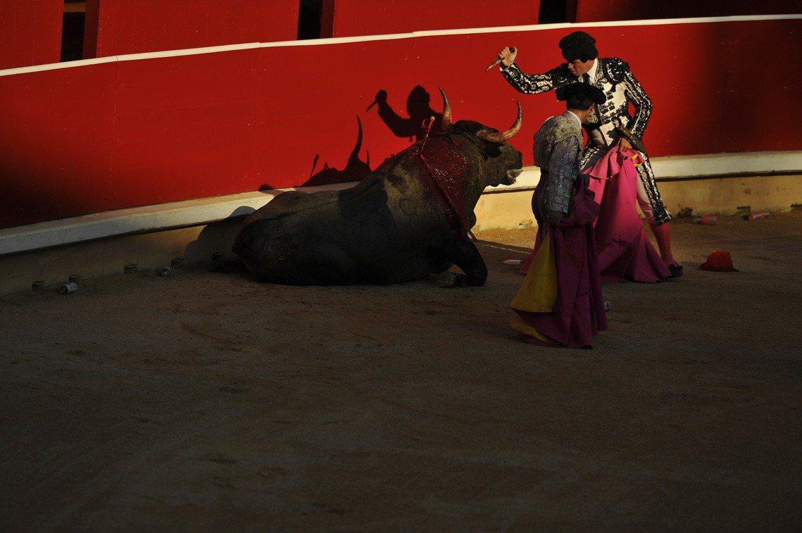 潘普洛納鬥牛場,鬥牛士對倒斃公牛的最後一擊。 圖/美聯社