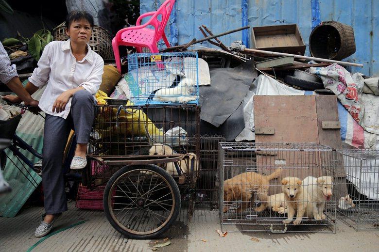 貴州媒體人孫中漢說,就吃狗肉而言,吃你盡可以吃,但將它當成「節日」甚至包裝成「産業」,這就難免引起眾怒。 圖/歐新社