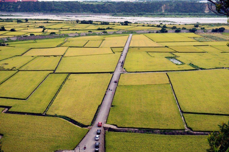 從空中俯視大塊稻田。(記者林郁姍/攝)