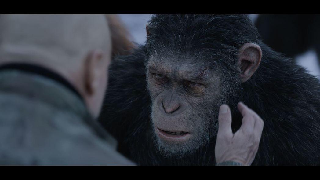 「猩球崛起3」將繼續講述猩猩主角凱薩的故事。圖/福斯提供