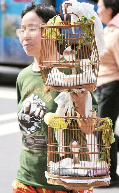 鳥友經常會帶寵物鳥出門遛鳥。 報系資料照