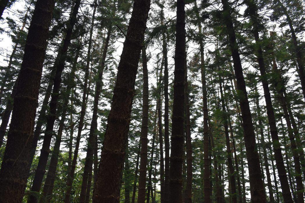 台中九天黑森林。圖/擷取自 Bunkichi Chang Flicker (CC...