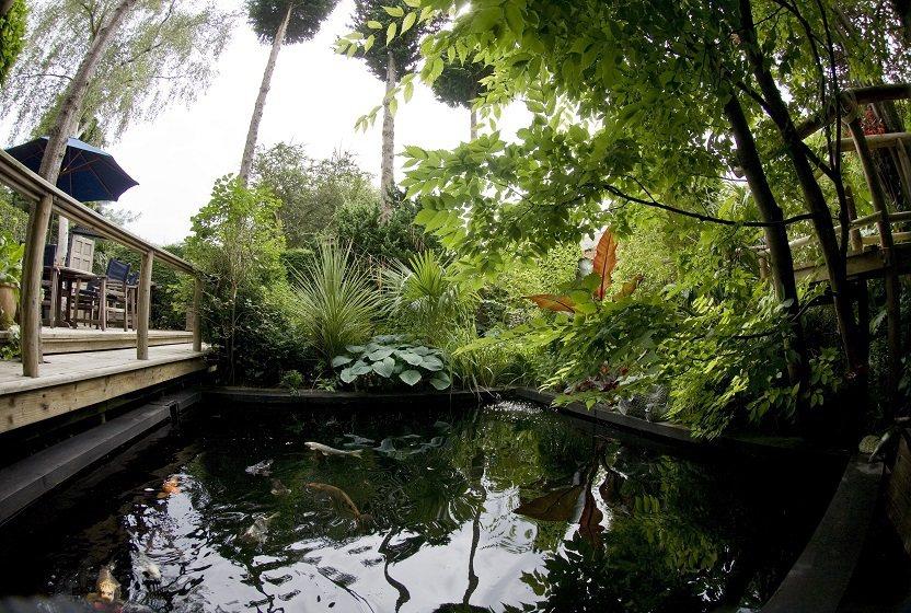 英國男子花費二十年在自家後院打造「都市叢林」。圖片來源/The Jungle G...