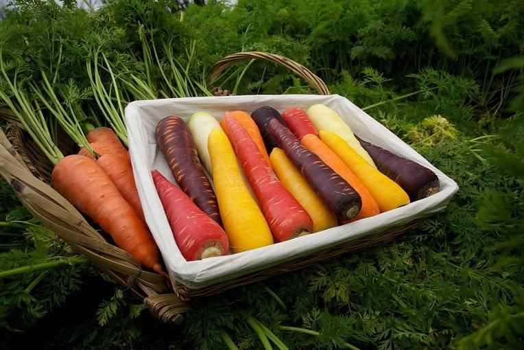 五彩繽紛的胡蘿蔔是台灣本土優質農產品的驕傲。圖由廠商提供。