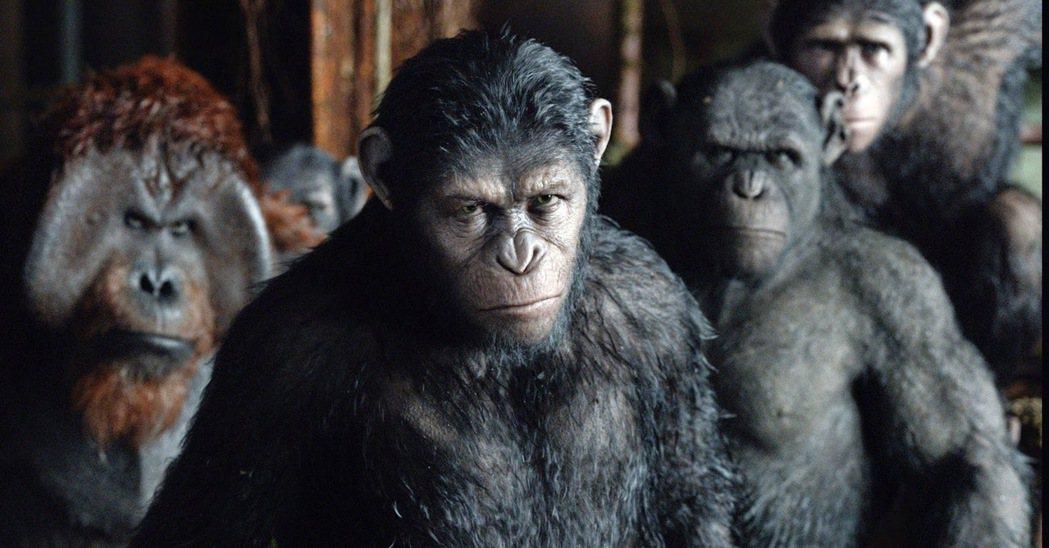 凱撒在「猩球崛起」系列當中的地位舉足輕重。圖/福斯提供