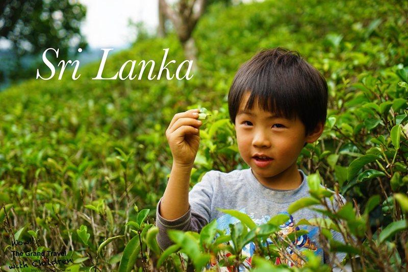 在高山茶鄉Nuwara Eliya隨意拍都像紅茶廣告。攝影:吳成夫/Bruce ...