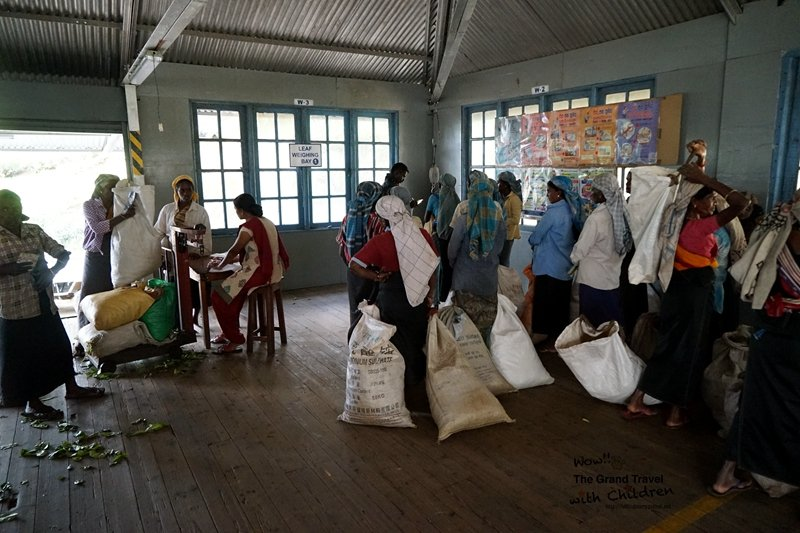 茶廠裡採完茶的斯里蘭卡婦女排隊等著秤重 (攝影:吳成夫Bruce Wu)